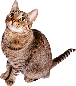 info_cat_img