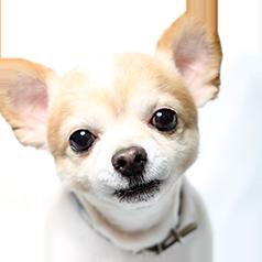 info_dog_img